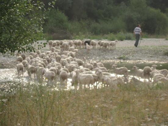 Le pastoralisme du Roubion démarre !